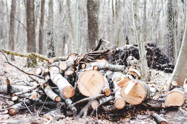 Sfalci, potature (e legno urbano) non sono rifiuti!