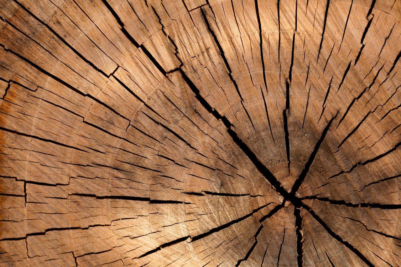 Il legno: stock di CO2 e capitale naturale