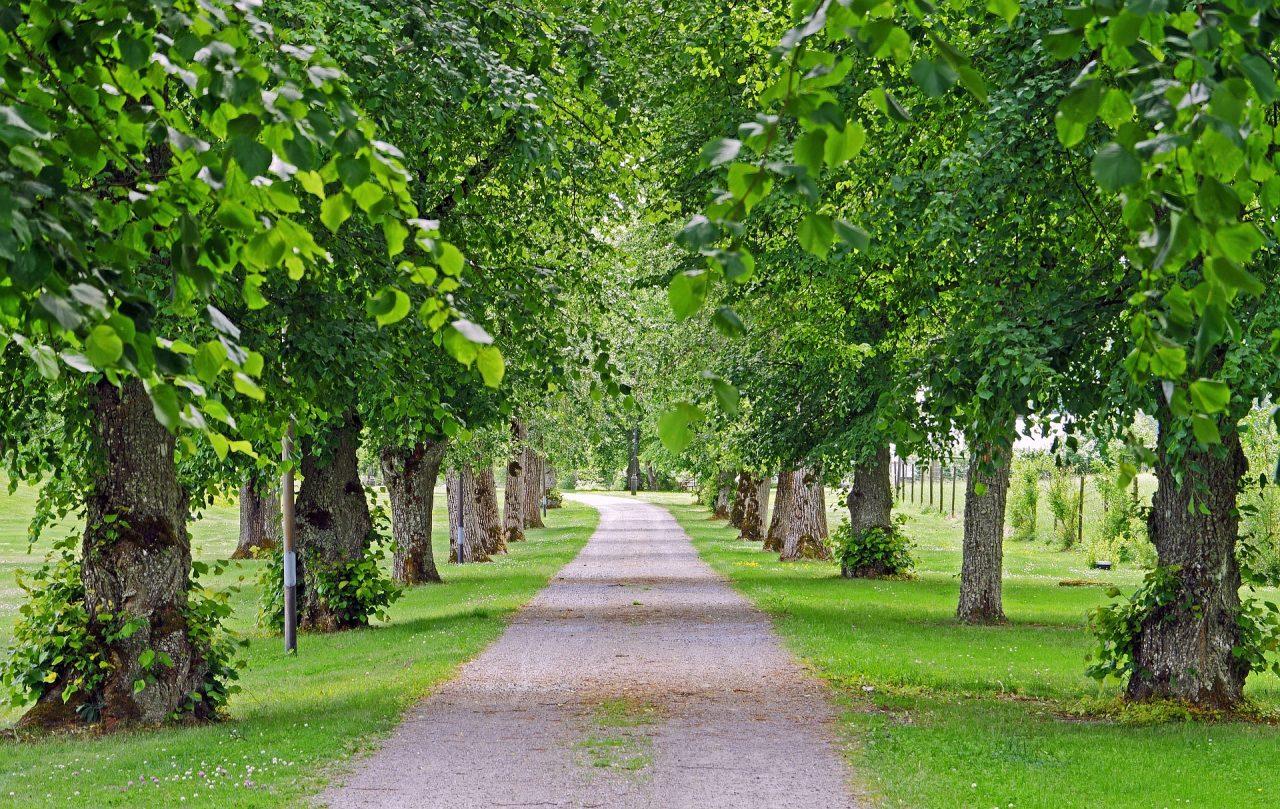 Una seconda vita per gli alberi in città