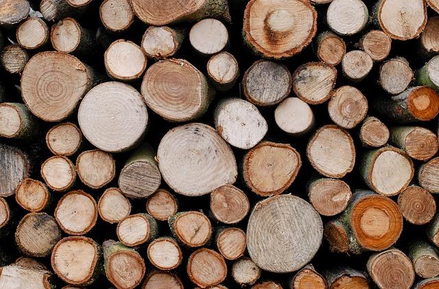 Il legno: un materiale straordinario!